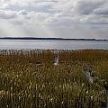 Rezerwat na Jeziorze Łuknajno